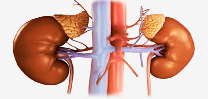 Ayurvedic Treatment for Chronic Renal Failure in Kota