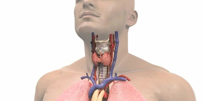 Ayurvedic Treatment for thyroid gland in Laos